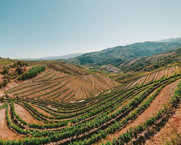 Prise de vue en grand angle d'un paysage avec de l'herbe verte et une chaîne de montagnes