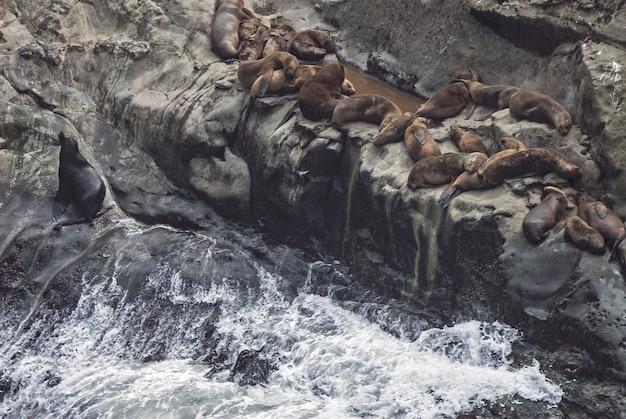 Prise de vue en grand angle de phoques portant sur un rocher près de l'eau