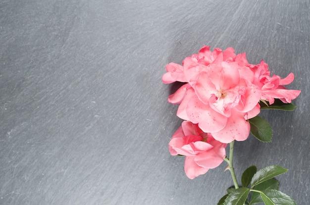 Prise de vue en grand angle de roses roses sur une surface rugueuse
