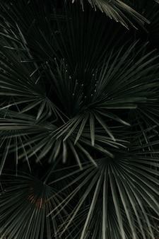 Prise de vue en niveaux de gris de belles feuilles de palmier