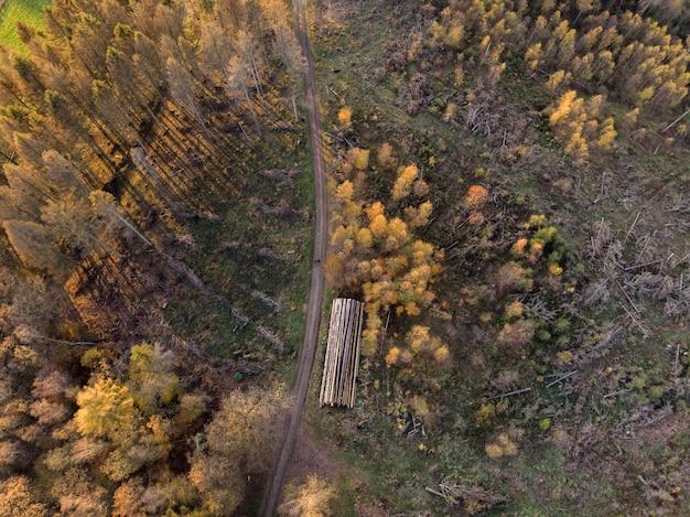Prise de vue en plongée des beaux arbres sur un champs capturés pendant la journée