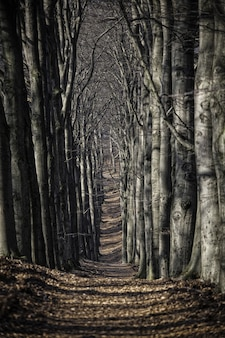 Prise de vue verticale d'un beau sentier couvert de feuilles entouré d'arbres au milieu de la forêt