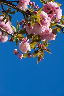 Prise de vue verticale à faible angle de fleurs roses en fleurs sur les branches d'arbres