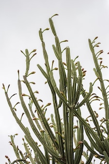 Prise de vue verticale à faible angle de plantes de cactus vert sous un ciel clair