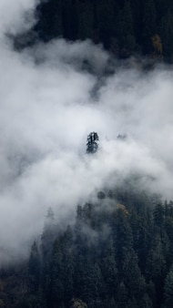 Prise de vue verticale d'une forêt avec des arbres couverts de nuages, à l'automne