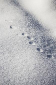 Prise de vue verticale à grand angle d'empreintes d'animaux rondes sur la neige