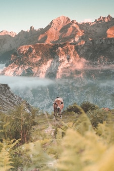 Prise de vue verticale d'une vache dans les montagnes pendant une journée ensoleillée - fond d'écran parfait