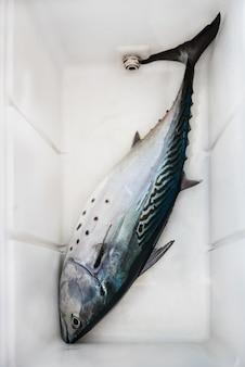 Les prises de pêche fraîches - thon dans une boîte en plastique
