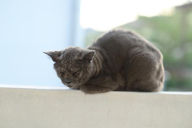 Problème de peau de lèpre malade de chat. mise au point sélective.