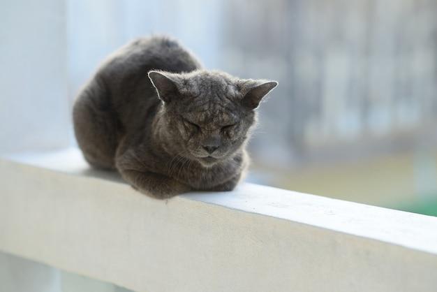 Problème de peau de lèpre malade de chat.