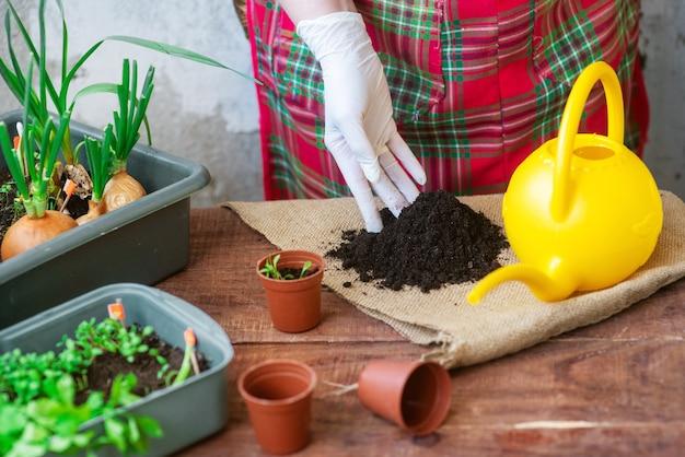 Processus de plantation de semis à la maison. planter des légumes verts dans des pots. instructions pour planter des plantes de jardin à la maison