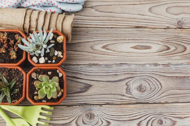 Processus de transplantation succulente, mini pousses et accessoires de jardinage