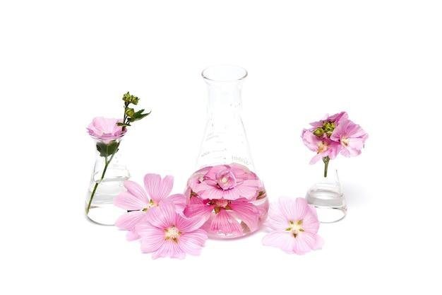 Production de cosmétiques naturels à base de fleurs, d'extrait de pétale dans une bouteille chimique.