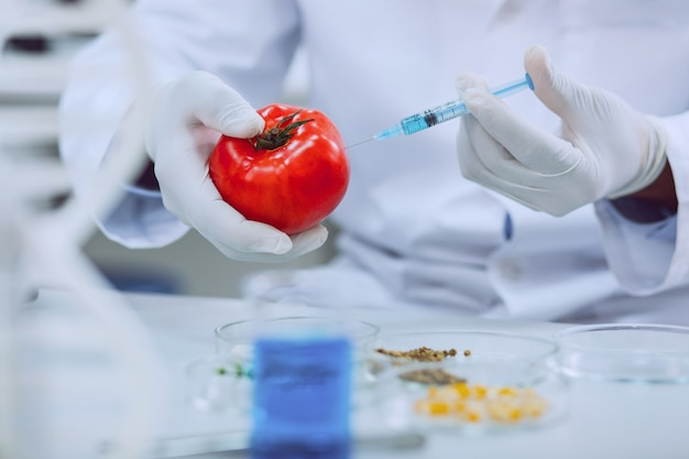 Produits améliorés. biologiste qualifié professionnel portant un uniforme et testant les tomates
