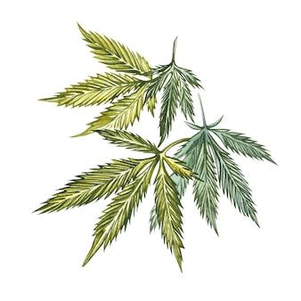 Produits de chanvre à l'huile de cbd. illustration aquarelle sur blanc bon pour les cosmétiques, la médecine, le traitement, l'aromathérapie, les soins infirmiers, la conception de l'emballage. ensemble de dessin d'éléments floraux, aquarelle botanique