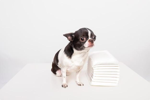 Produits d'hygiène animale, soins pour chiens, toilettes pour petits animaux