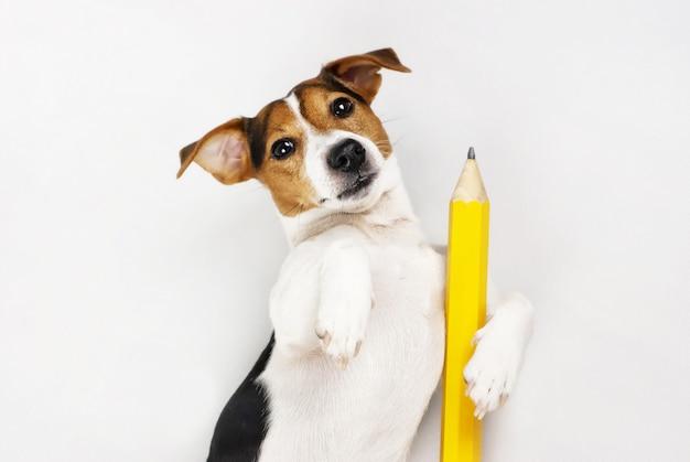 Professeur de chien