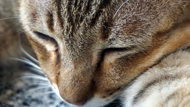 Profil chat endormi les crocs sur le visage et les yeux