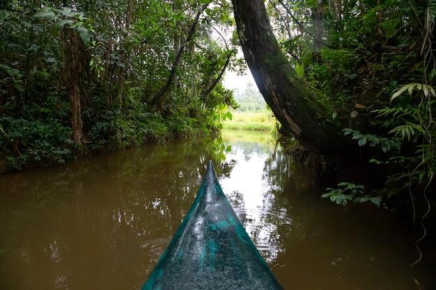 La promenade en bateau sur l'eau dans la forêt tropicale