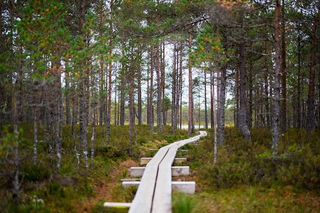 Promenade en bois à travers la belle forêt d'automne et les marais
