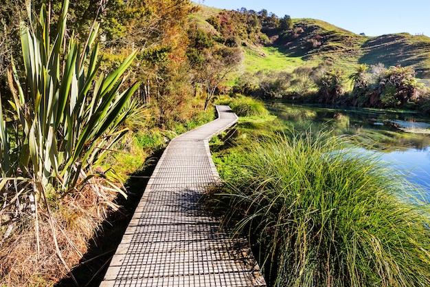 Promenade sur le lac dans la forêt tropicale, nouvelle-zélande