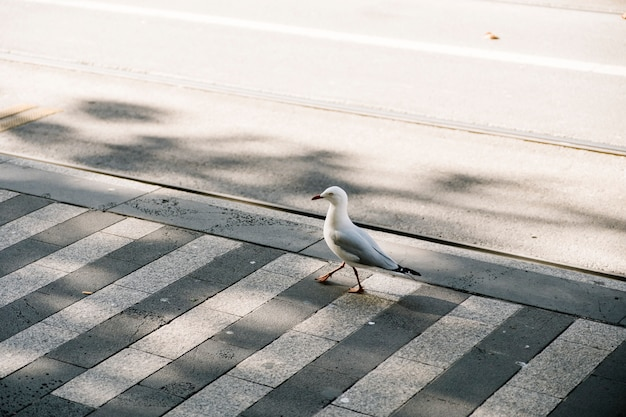 Promenade des oiseaux sur le sentier