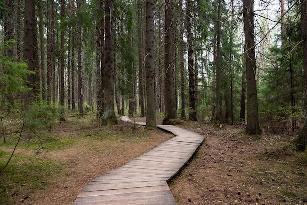 Promenade / sentier écologique dans un parc national à travers la vieille forêt d'épinettes de conifères, sentier naturel à travers un environnement protégé