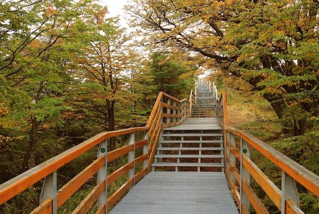 Promenade vide parmi le feuillage d'automne dans le parc national los glaciares