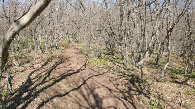 Promenez-vous dans la forêt avec des arbres secs sans feuilles. quelqu'un marche le long d'un chemin forestier. pdv. 4k uhd