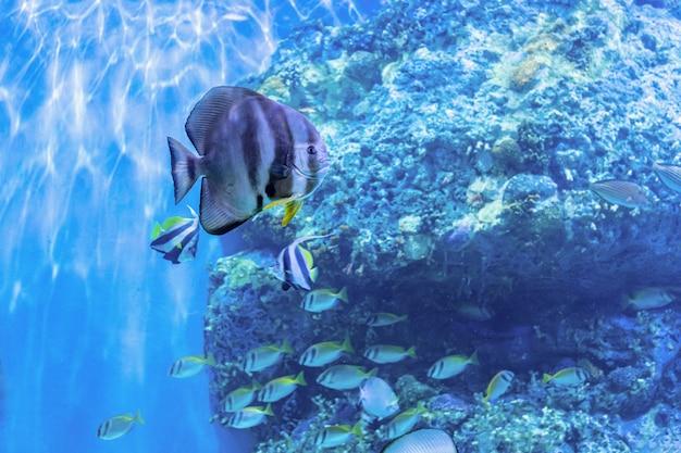 À propos des poissons de mer et des poissons d'eau douce dans l'aquarium