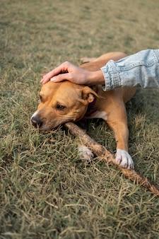 Propriétaire caressant son chien tout en restant dans l'herbe