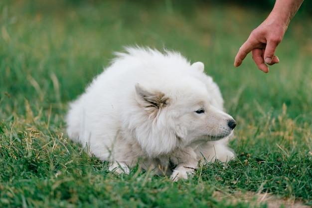 Propriétaire demandant d'exécuter les commandes de son chien blanc en plein air dans le parc