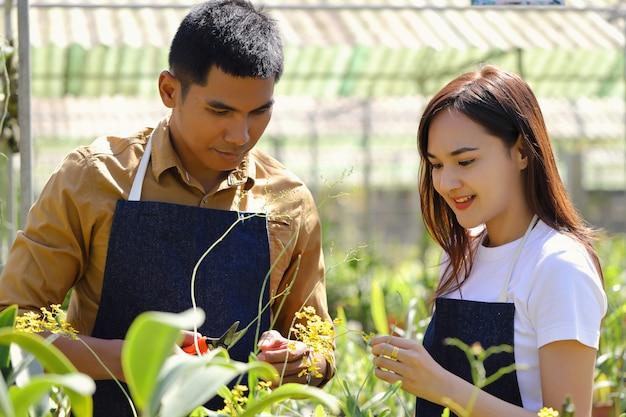 Le propriétaire du jardin d'orchidées aide à s'occuper de son entreprise d'orchidées.