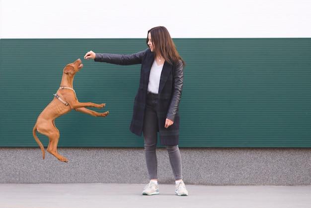 Le propriétaire entraîne le chien.
