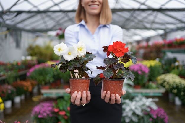 Propriétaire d'entreprise souriant dans sa pépinière debout tenant dans la main deux pots de fleurs rouges et blanches dans la serre