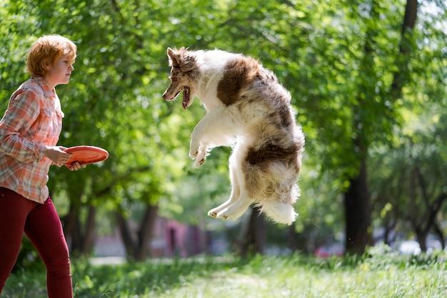 Le propriétaire lance une soucoupe volante et le chien l'attrape en sautant. dressez votre animal de compagnie dans le parc par une chaude journée ensoleillée.