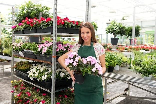 Propriétaire de pépinière montrant une impatiens en pot en fleurs