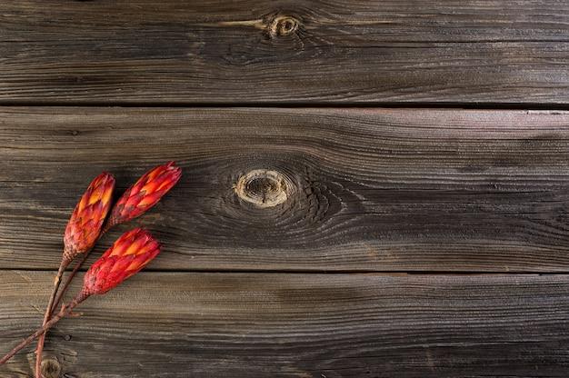 Protea séchée sur une surface en bois
