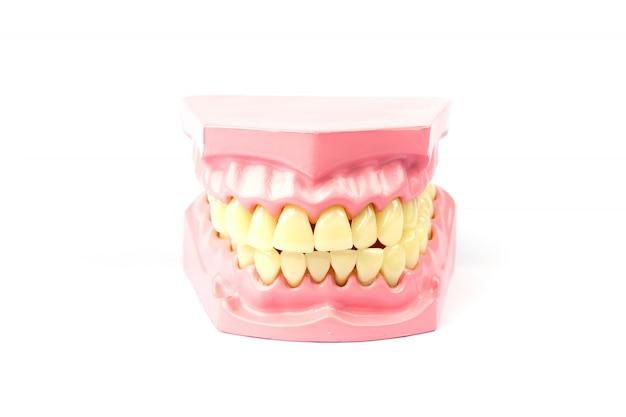 Prothèse dentaire sur fond blanc