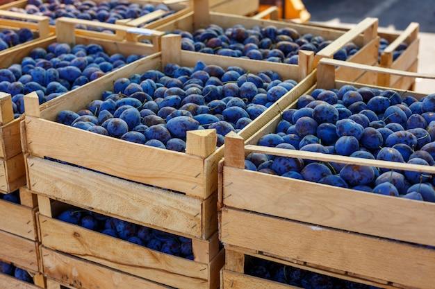 La prune mûre bleue se trouve dans des boîtes.