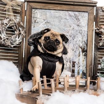 Pug habillé assis sur un pont dans un paysage d'hiver