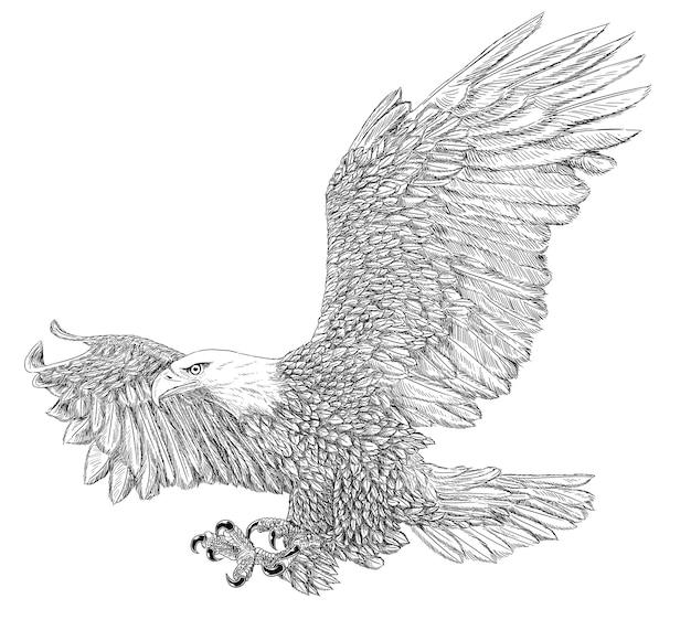Pygargue à tête blanche noir et blanc isolé sur fond blanc