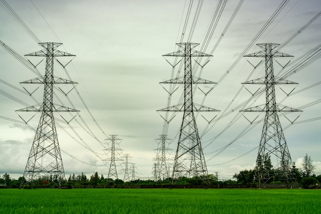 Pylône électrique haute tension et fil électrique au champ de riz vert et forêt d'arbres