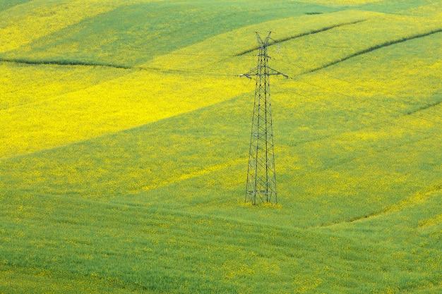 Pylônes haute tension dans le domaine des fleurs de moutarde.