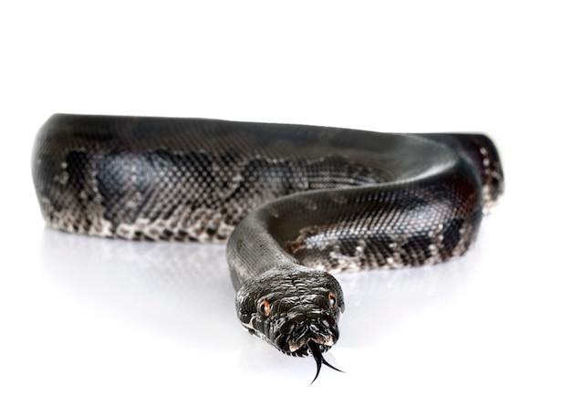 Python en studio