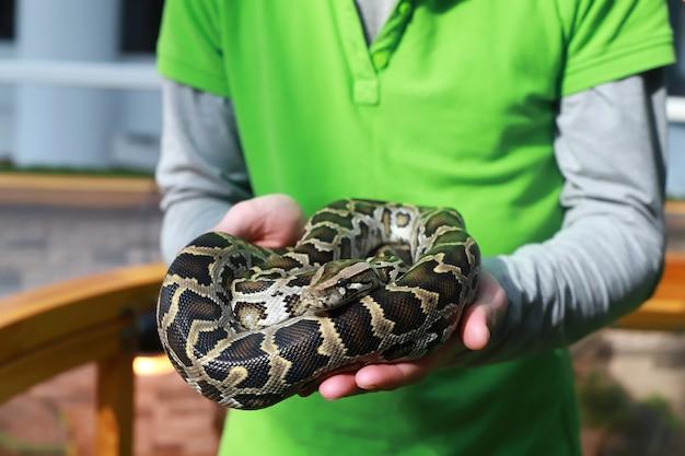 Python tigre dans des mains humaines