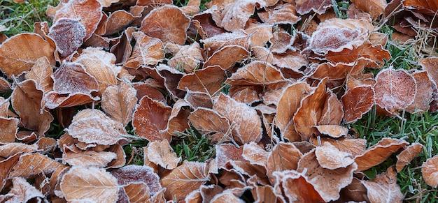 Quand le froid veut dire adieu à l'automne