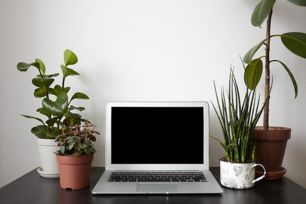 Quatre pots de fleurs et ordinateur portable ouvert avec écran noir sur le bureau.