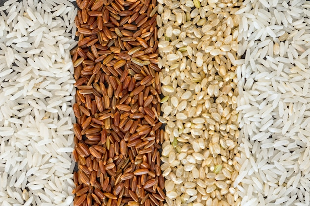 Quatre types de fond de riz