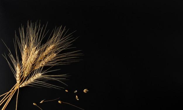 Quelques épillets dorés parfaits du blé avec des grains sur le fond noir.